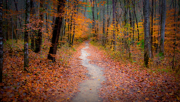 <b>Autumn Path</b> - Other & Nature Background Wallpapers on Desktop ...